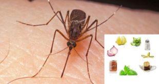 Remedii impotriva intepaturilor de insecte