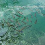 Pesti in Lacurile Plitvice